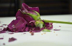end love rose